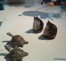 Ardyn Griffin_Cats and Tortoises